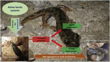 Batracobdella leeches, environmental features and
