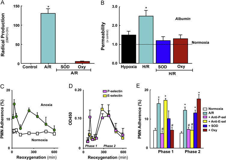 Studies Implicate Early Injury To >> Reperfusion Injury And Reactive Oxygen Species The