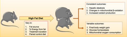 mouse fed high fat diet fatty liver