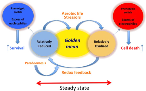 Redox Homeostasis The Golden Mean Of Healthy Living Sciencedirect