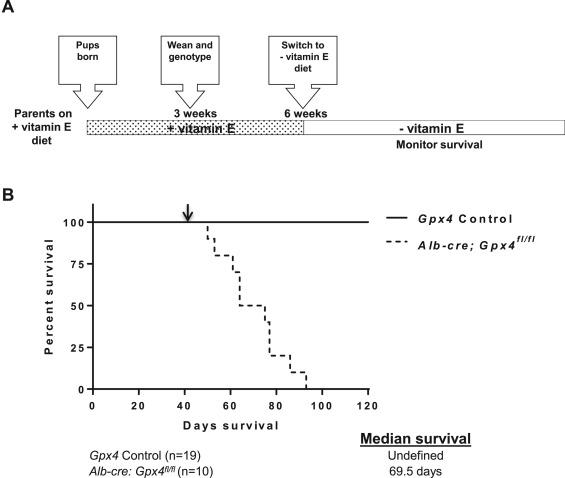 Glutathione peroxidase 4 and vitamin E cooperatively prevent