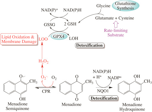 Glutathione maintenance mitigates age-related susceptibility