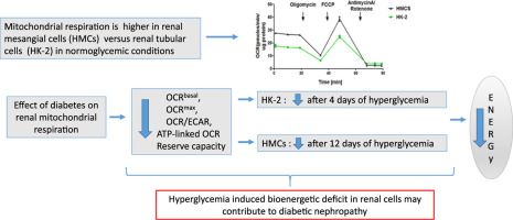 Hyperglycemia induced damage to mitochondrial respiration in