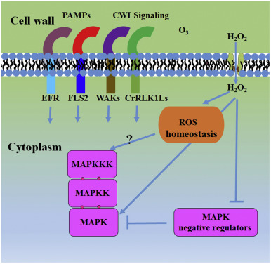 A review of redox signaling and the control of MAP kinase ... on geographic feature, map projection, cartography of the united states, geographic information system, grid reference, global map, geographic coordinate system, satellite imagery, early world maps, history of cartography,