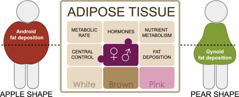Adipose Tissue Biology