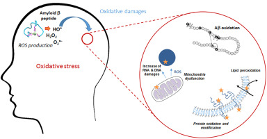 Oxidative stress and the amyloid beta peptide in Alzheimer's disease