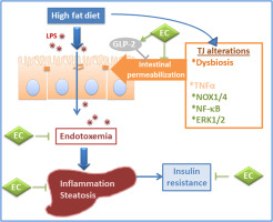 high fat diet blood ph
