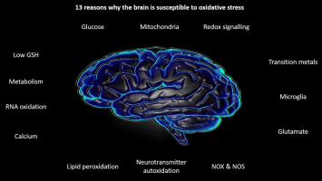 Your Brain Is Particularly Vulnerable >> 13 Reasons Why The Brain Is Susceptible To Oxidative Stress