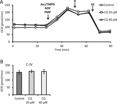 Methods For Assessing Mitochondrial Quality Control Mechanisms And