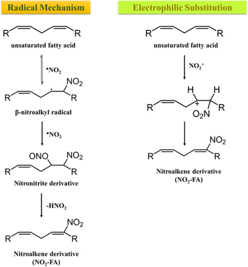 Discovery of bioactive nitrated lipids and nitro-lipid-protein