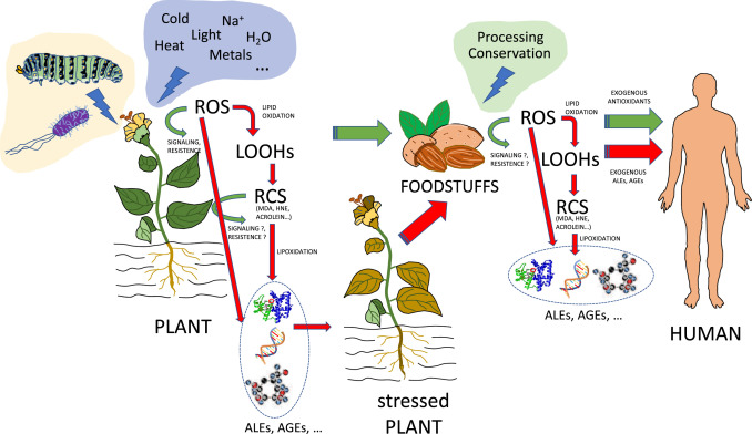 A concise appraisal of lipid oxidation and lipoxidation in