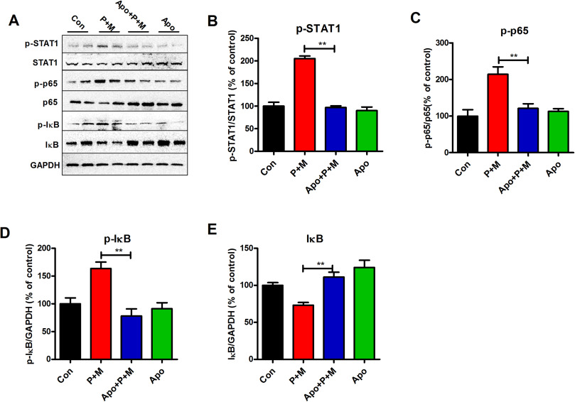 Inhibition of NADPH oxidase by apocynin prevents learning