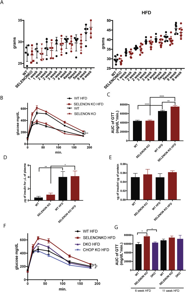 SELENON (SEPN1) protects skeletal muscle from saturated