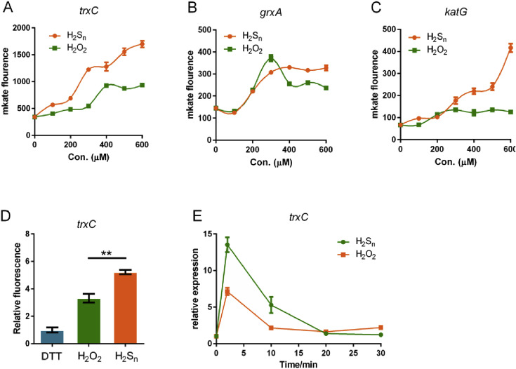 OxyR senses sulfane sulfur and activates the genes for its