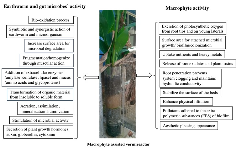 Treatment of wastewater by vermifiltration integrated with