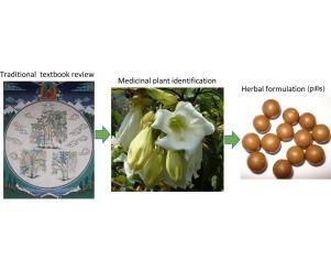 Pharmacological, ethnopharmacological, and botanical evaluation of