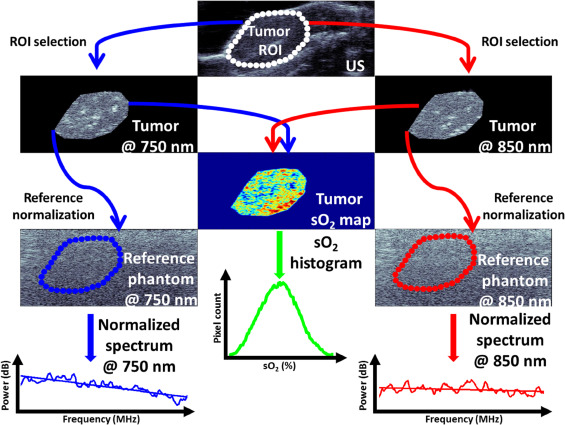 Photoacoustic signal characterization of cancer treatment