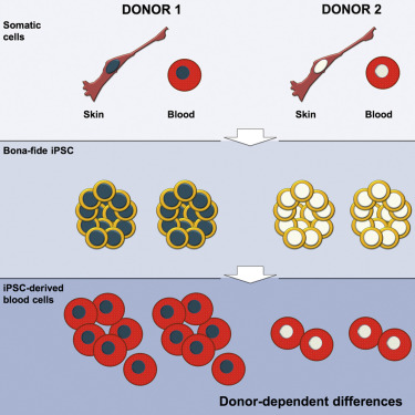 what is the purpose of a somatic cell donor