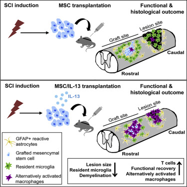 Cell-Based Delivery of Interleukin-13 Directs Alternative