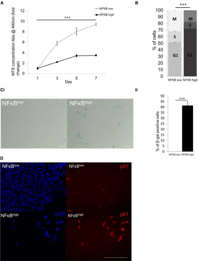 NF-κB Activity Initiates Human ESC-Derived Neural Progenitor