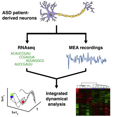 Dynamical Electrical Complexity Is Reduced during Neuronal