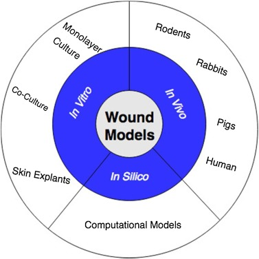 Wound healing models: A systematic review of animal and non