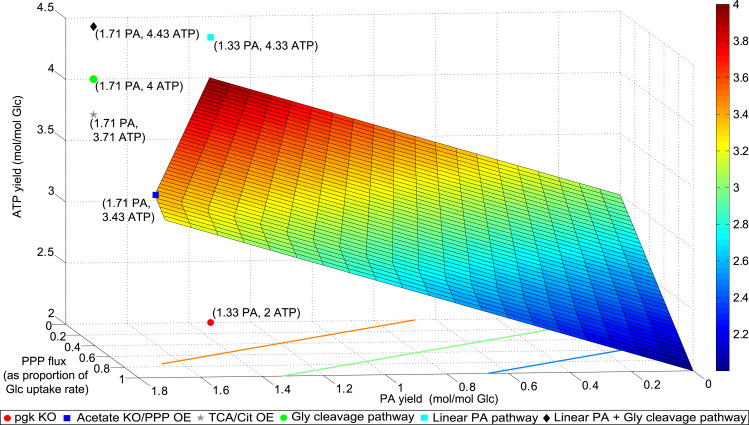 Genome-scale model guided design of Propionibacterium for