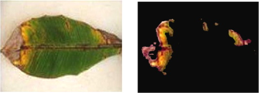 Detection of plant leaf diseases using image segmentation and soft