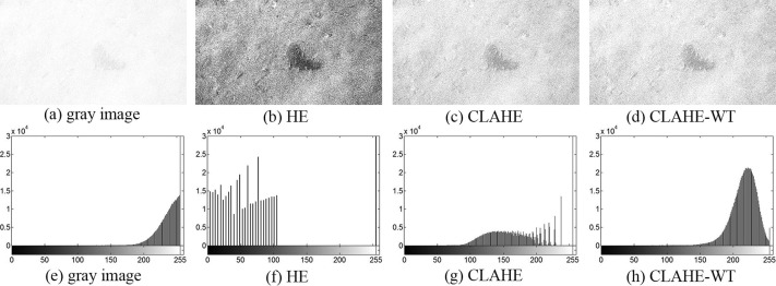 Underwater image quality enhancement of sea cucumbers based on