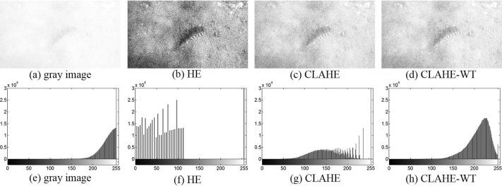 Underwater image quality enhancement of sea cucumbers based