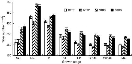 Yield and tillering response of super hybrid rice