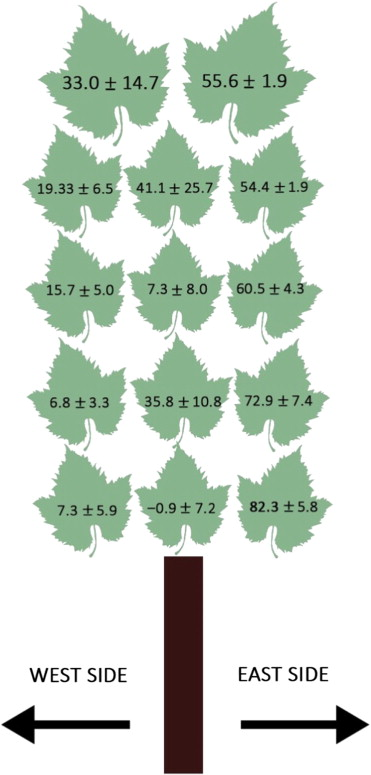 Variation in intrinsic WUE (as AN/gs) with leaf position in the canopy. Intrinsic WUE (AN/gs ?mol CO2 mol? 1 H2O) measured at ...  sc 1 st  Science Direct & From leaf to whole-plant water use efficiency (WUE) in complex ...