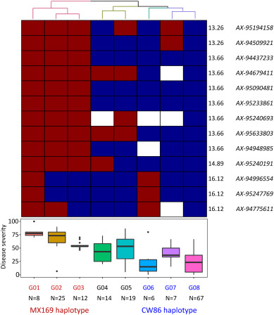 SNP-based linkage mapping for validation of adult plant