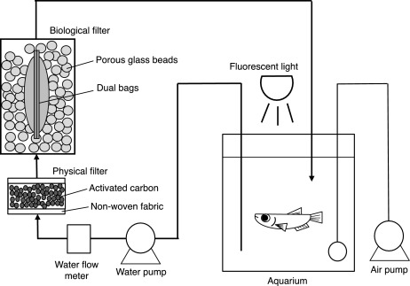 Biological Filter Capable Of Simultaneous Nitrification And