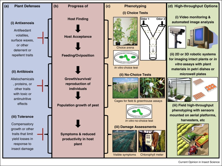 Applying high-throughput phenotyping to plant–insect interactions