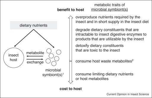 Omics and the metabolic function of insect–microbial symbioses