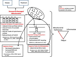 Association Of Mitochondrial Dysfunction And Fatigue A
