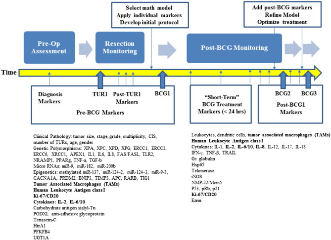 Treatment of non-muscle invasive bladder cancer with Bacillus