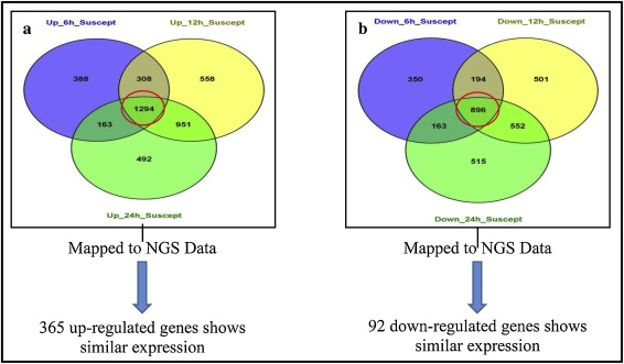 Transcriptome profiling reveals genetic basis of disease resistance