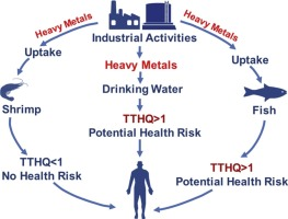 Potential health risk consequences of heavy metal