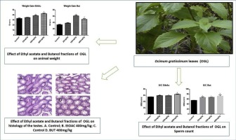 Safety effect of fractions from methanolic leaf extract of