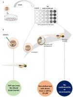 EMAnalysis A rapid zebrafish profilling assay for neurodevelopmental toxicant identification