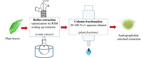 Reflux Extraction And Cleanup Process By Column Chromatography For High Yield Of Andrographolide Enriched Extract Sciencedirect