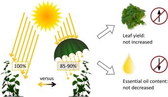 Effect of shading on leaf yield, plant parameters, and