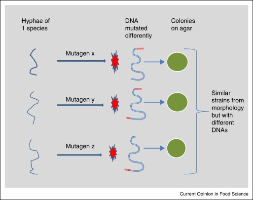 Mutagens Affect Food And Water Biodeteriorating Fungi Sciencedirect