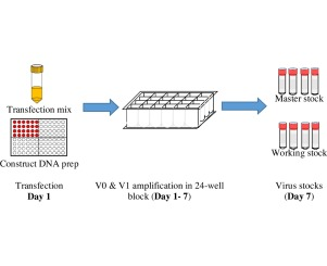 Transfection of insect cell in suspension for efficient