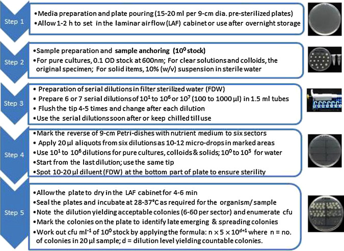 Optimization of single plate-serial dilution spotting (SP