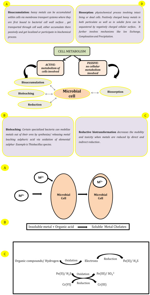 Bacterial Exopolysaccharide mediated heavy metal removal: A