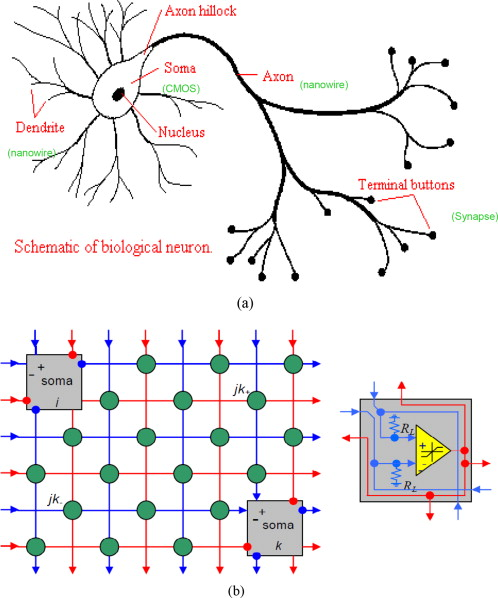 A novel mlp network implementation in cmol technology sciencedirect a simplified schematic of a cmol based artificial neural network a schematic of biological neuron b a simplified schematic of connection of two neurons ccuart Gallery