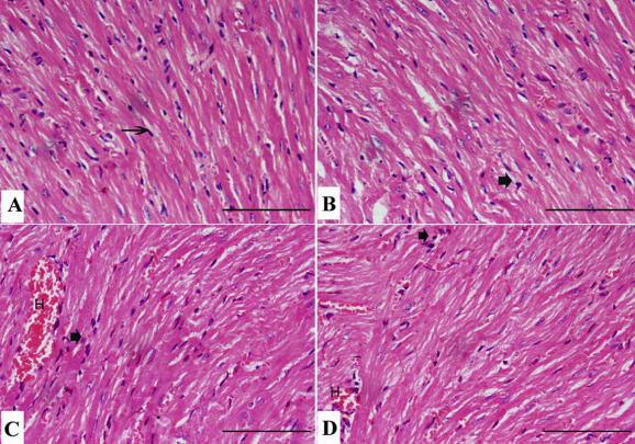 Effect of antibiotics on sperm amoxicillan